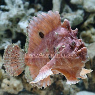 Access Denied Angler Fish Salt Water Fish Deep Sea Creatures