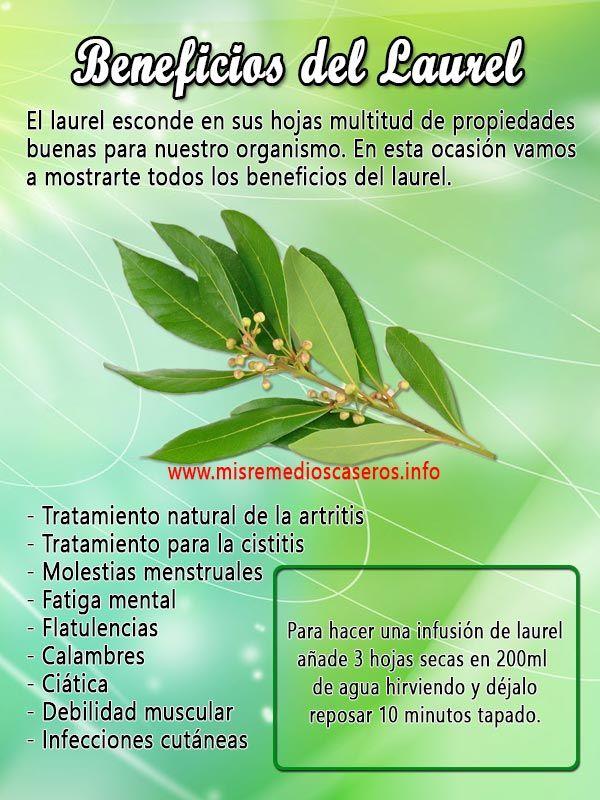 Beneficios Del Laurel Health And Nutrition Food Health Benefits Healing Herbs