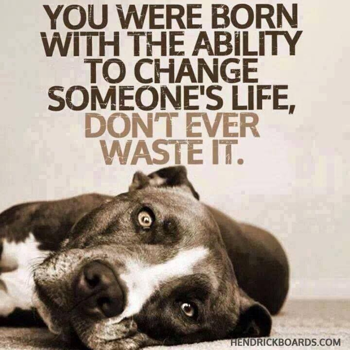 If You Can T Adopt Foster If You Can T Foster Donate If You Can T Donate Volunteer If You Can T Volunteer Cross Post Never Un Dog Quotes Dogs Pitbulls