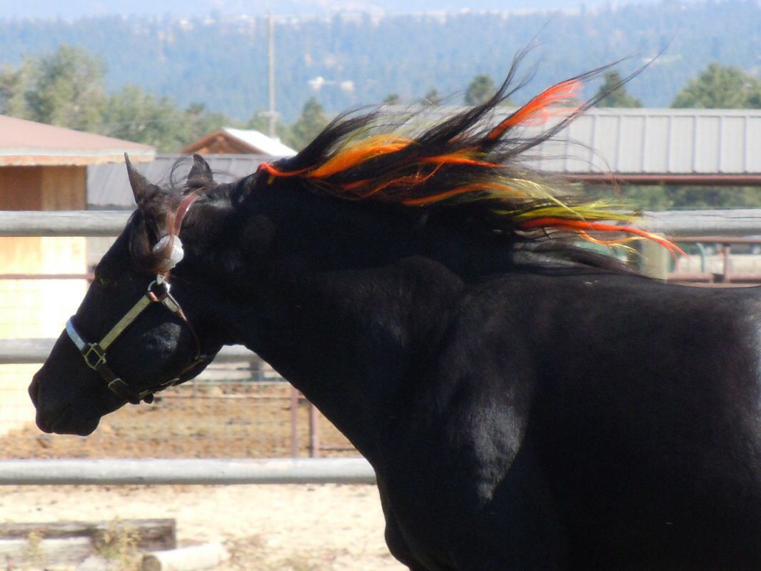 Beautiful Mane Extensions In Black Horses Mane Manes And Tails