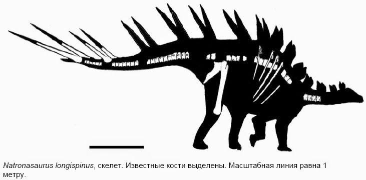 Natronasaurus longispinus. Photo : Roman Ulansky
