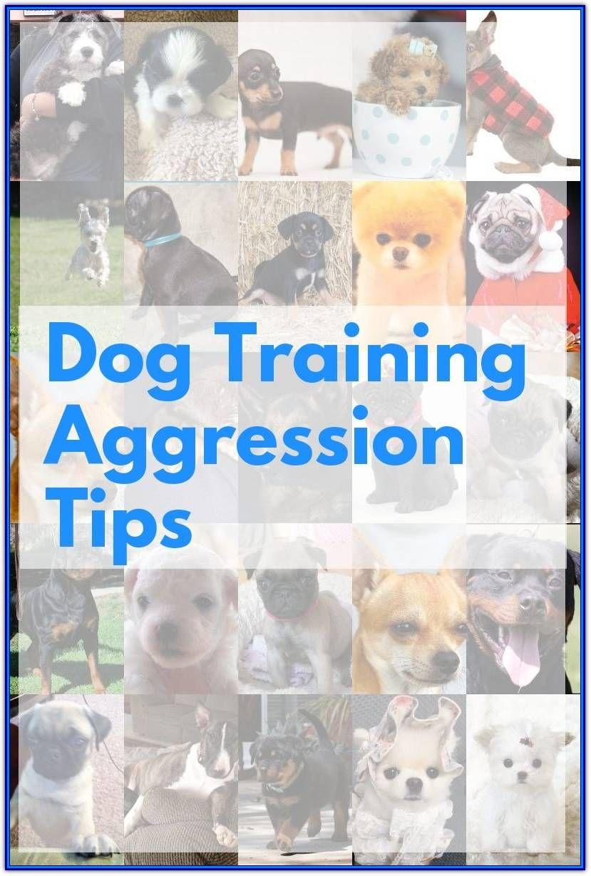 New To Aggressive Dog Training Consider This Advice Dog