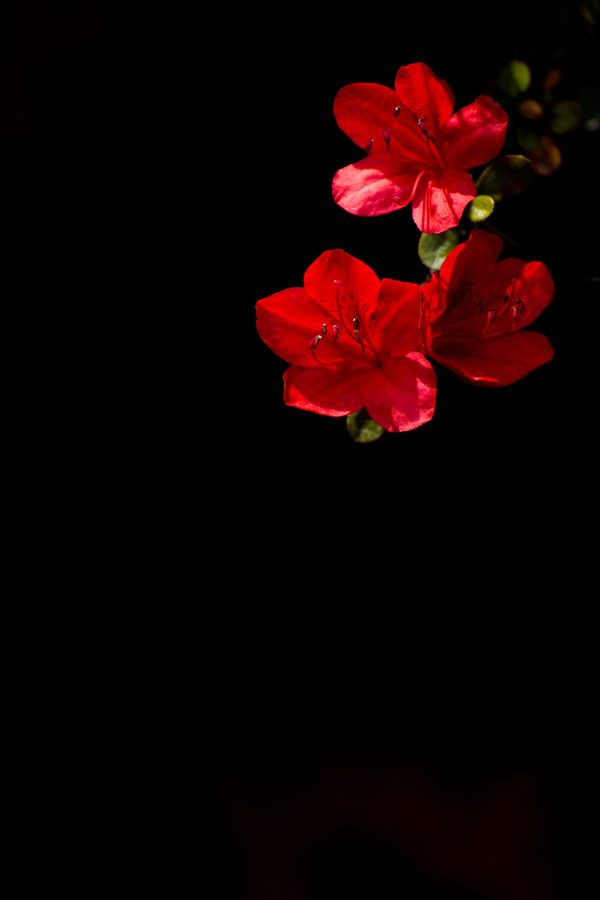 Red Flowers #red #black