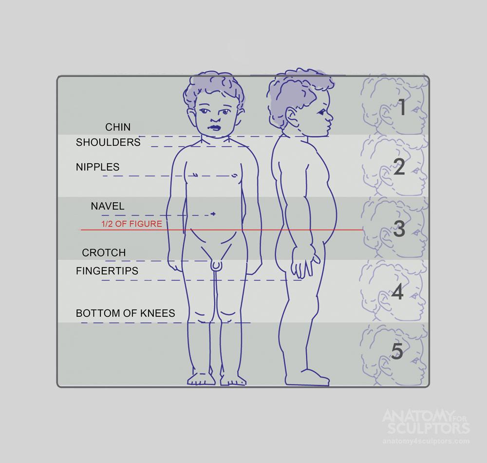 Anatomy For Sculptors - anatomy   Anatomy   Pinterest   Anatomy ...