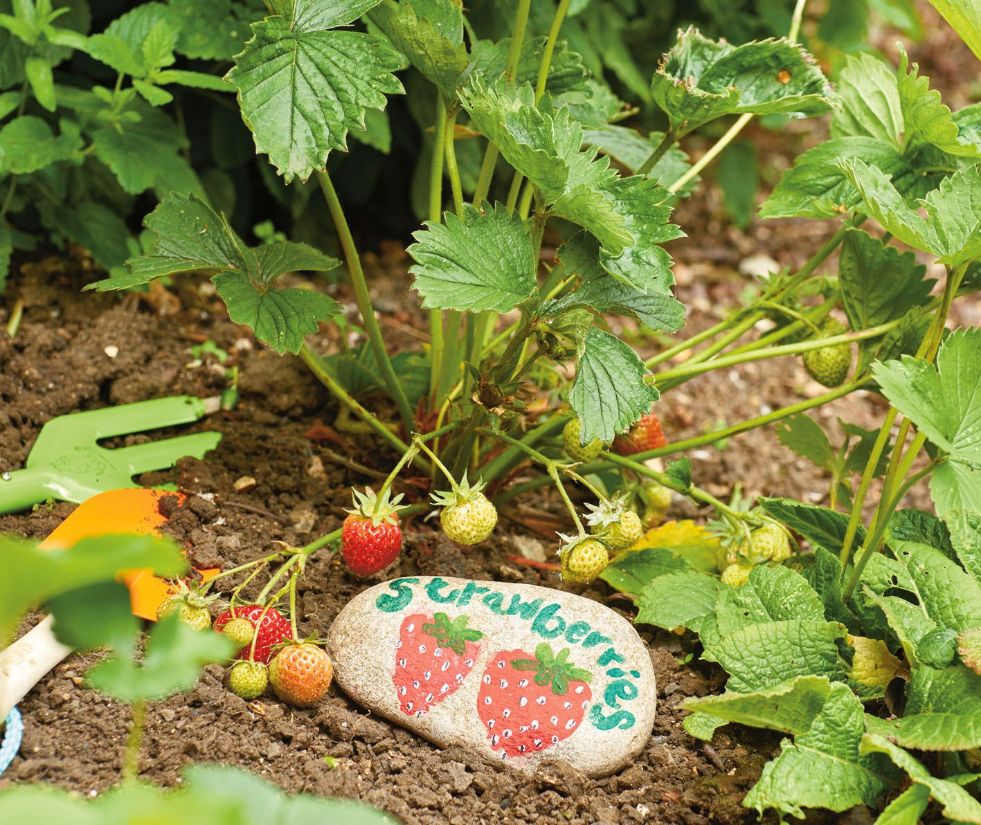 Encourage your kids by planting their own fruit and