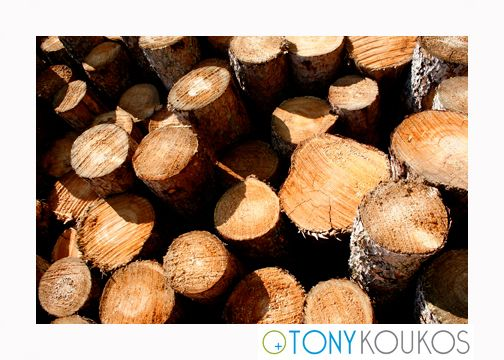 wood, woodgrain, tree, logs, trunk, texture, round, smooth, rings