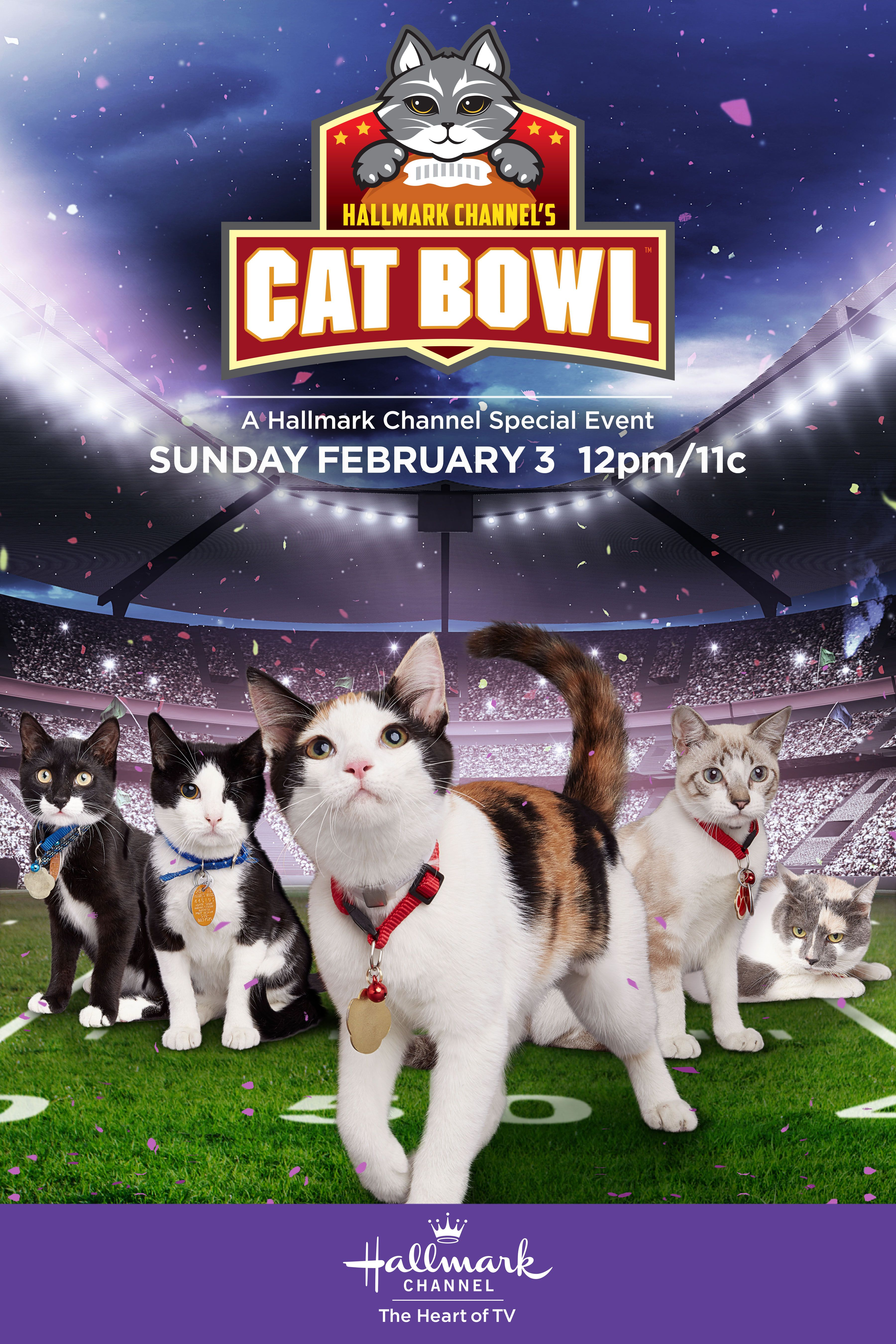 The First Ever Cat Bowl Featuring Senior Cats Ready For Adoption Premieres On February 2 Only On Hallmark Channel Catb Cat Bowls Kitten Bowls Cat Vs Dog