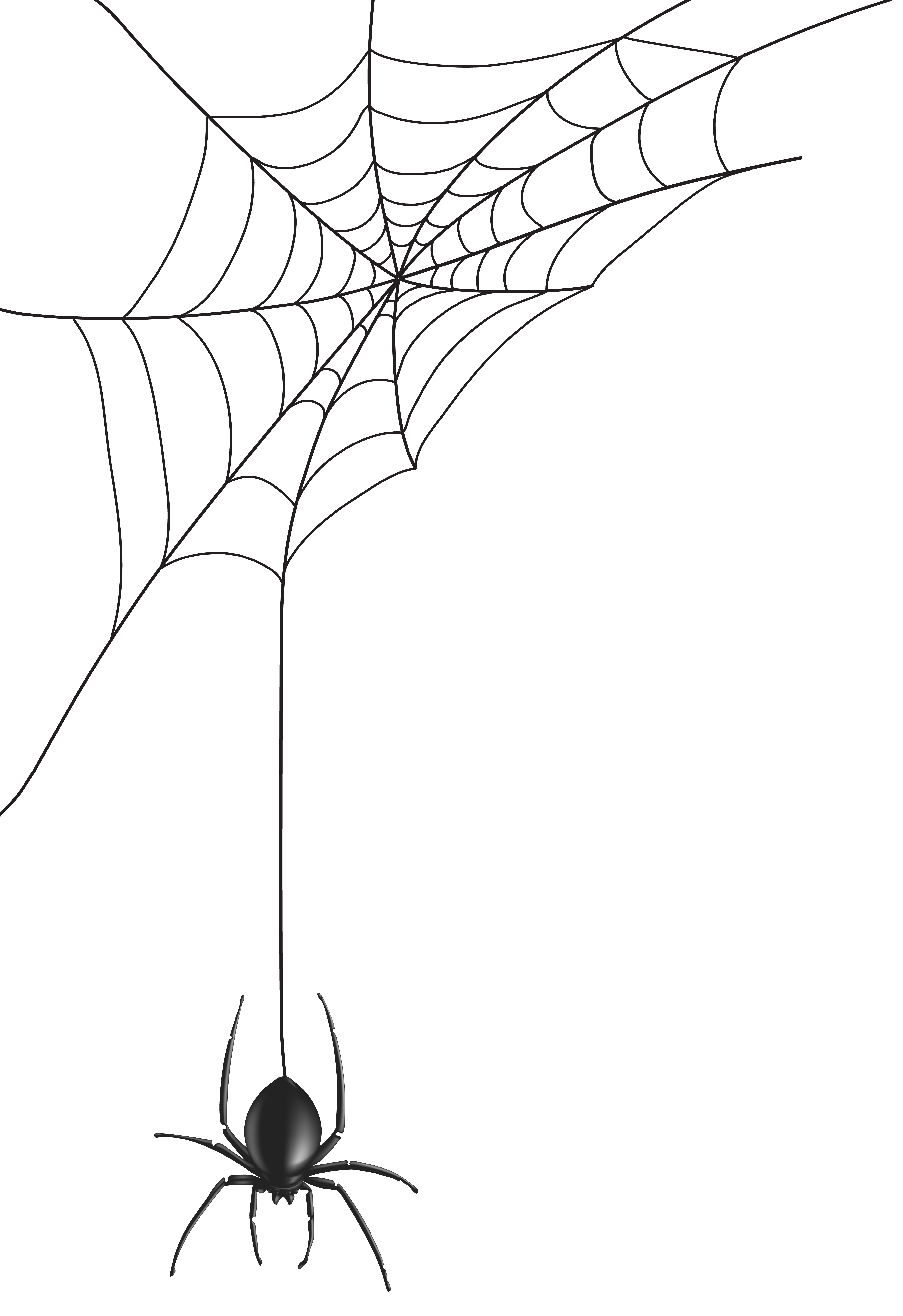 Spider Web Png Clip Art Image Gallery Yopriceville High Quality Images And Transparent Png Free Clipart Spider Art Spider Drawing Spider Web Drawing