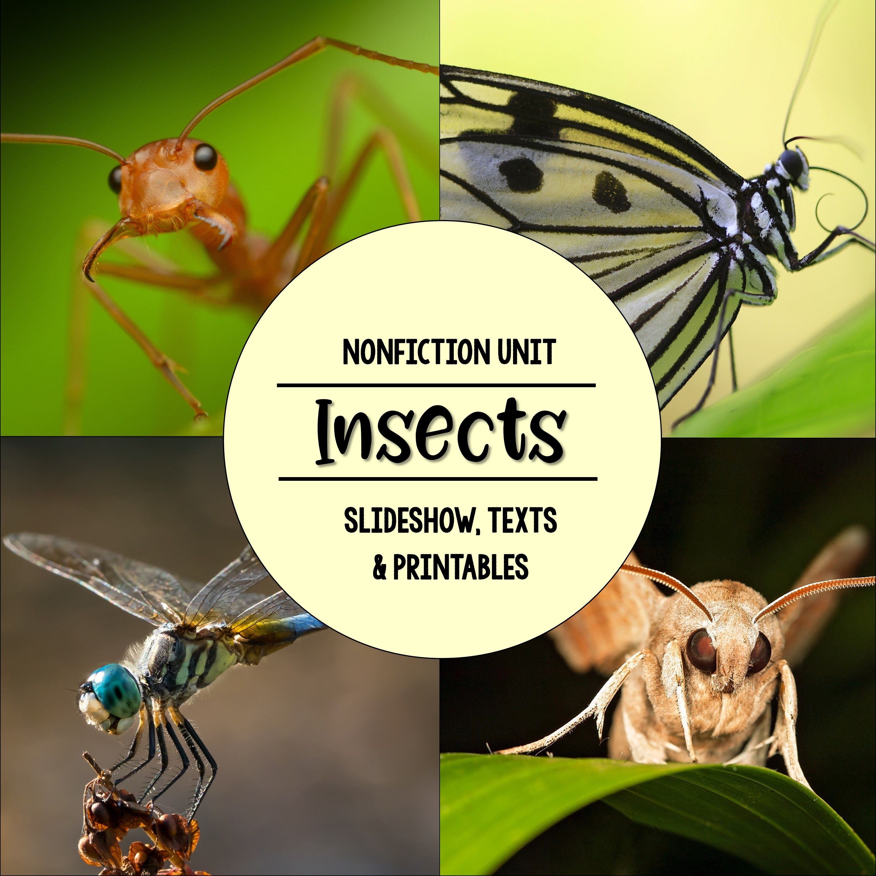 Everything you need to teach young students about insects! Engaging photo slideshow, 3 levels of text passages, comprehension checks, vocabulary practice, a mini-book, a bingo game, and so much more!