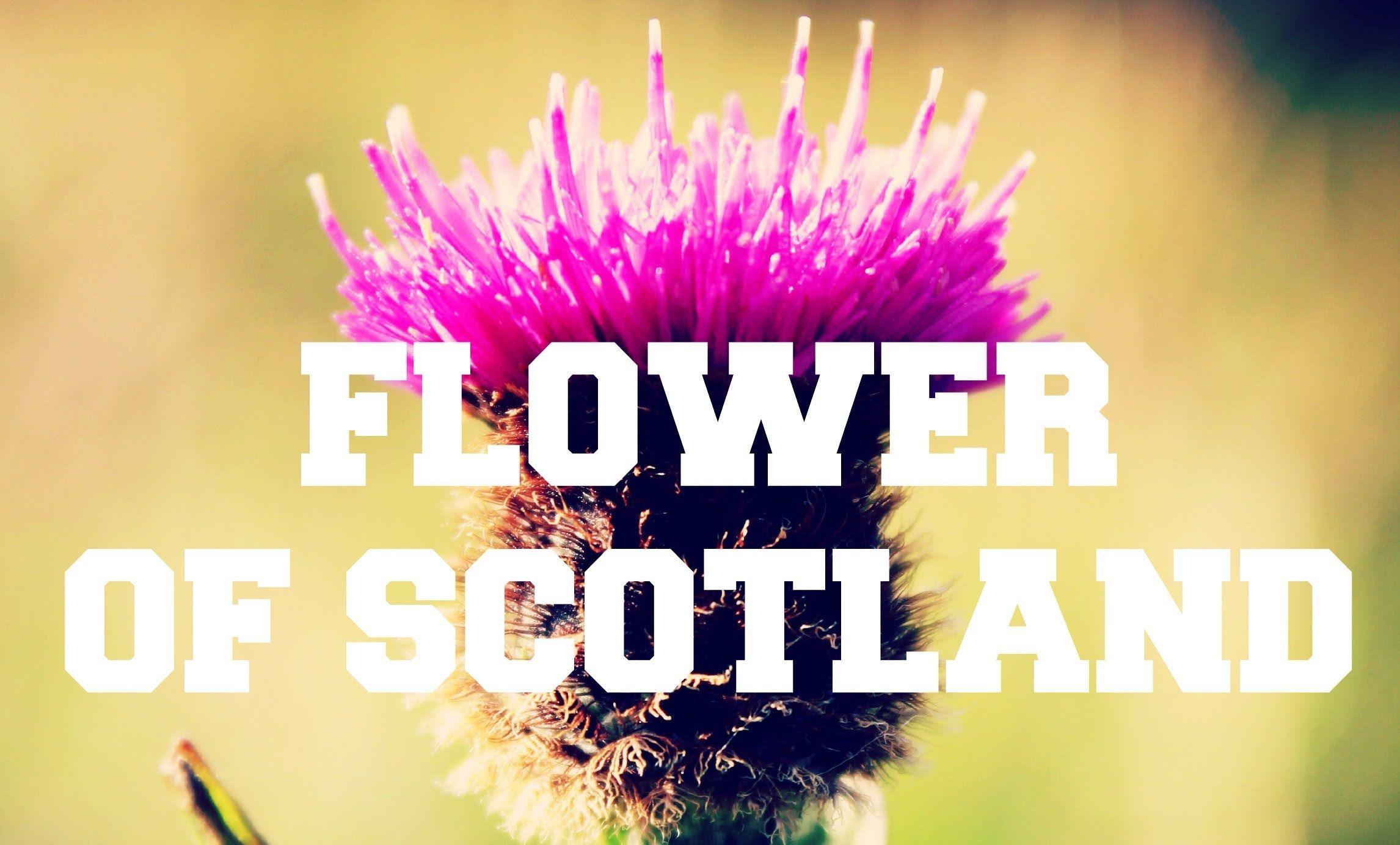 Scottish Music Flower Of Scotland ♫ Scottish music