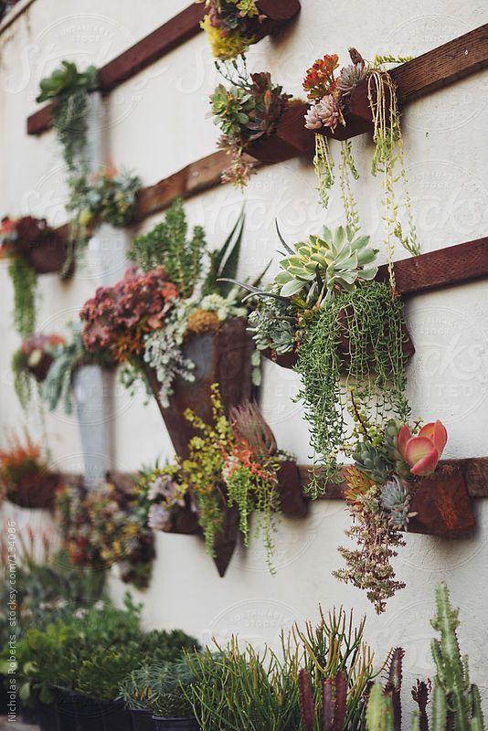 Succulent Wall Garden By Nicholas Roberts