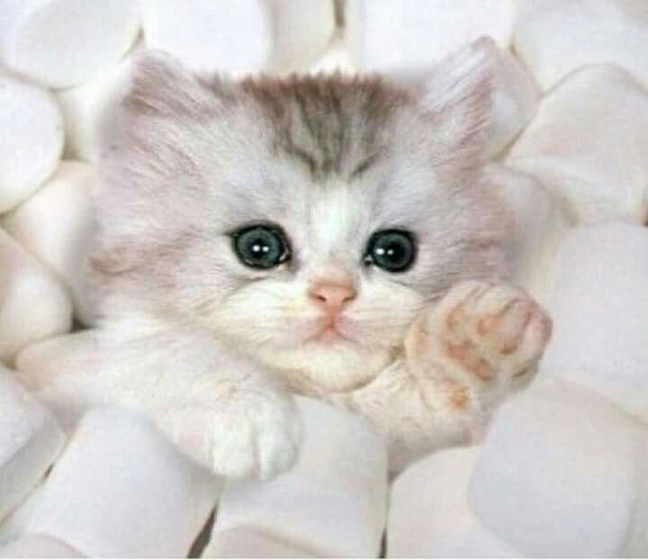 Pin By Amitrevska5 On Cats Kittens Cutest Cute Baby Animals