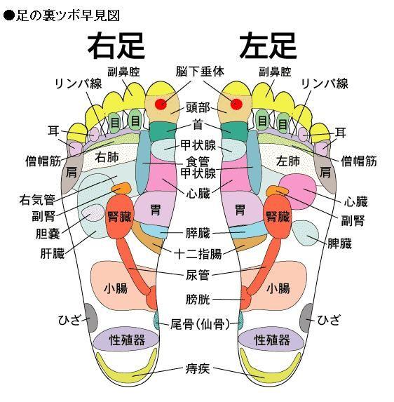 足の反射区図