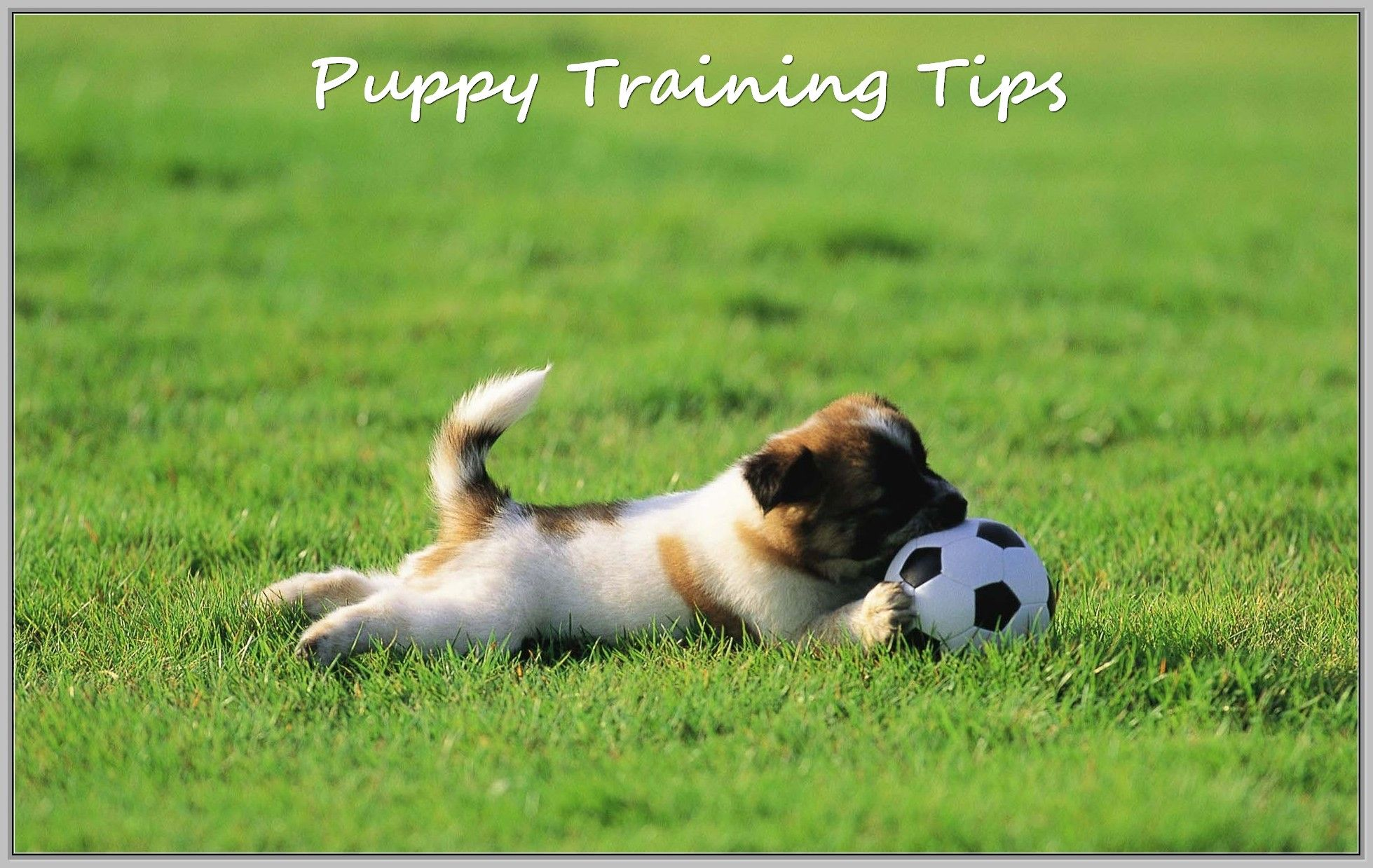 Dogs Need Training Dog Expressions Cute Dog Wallpaper Dog Allergies