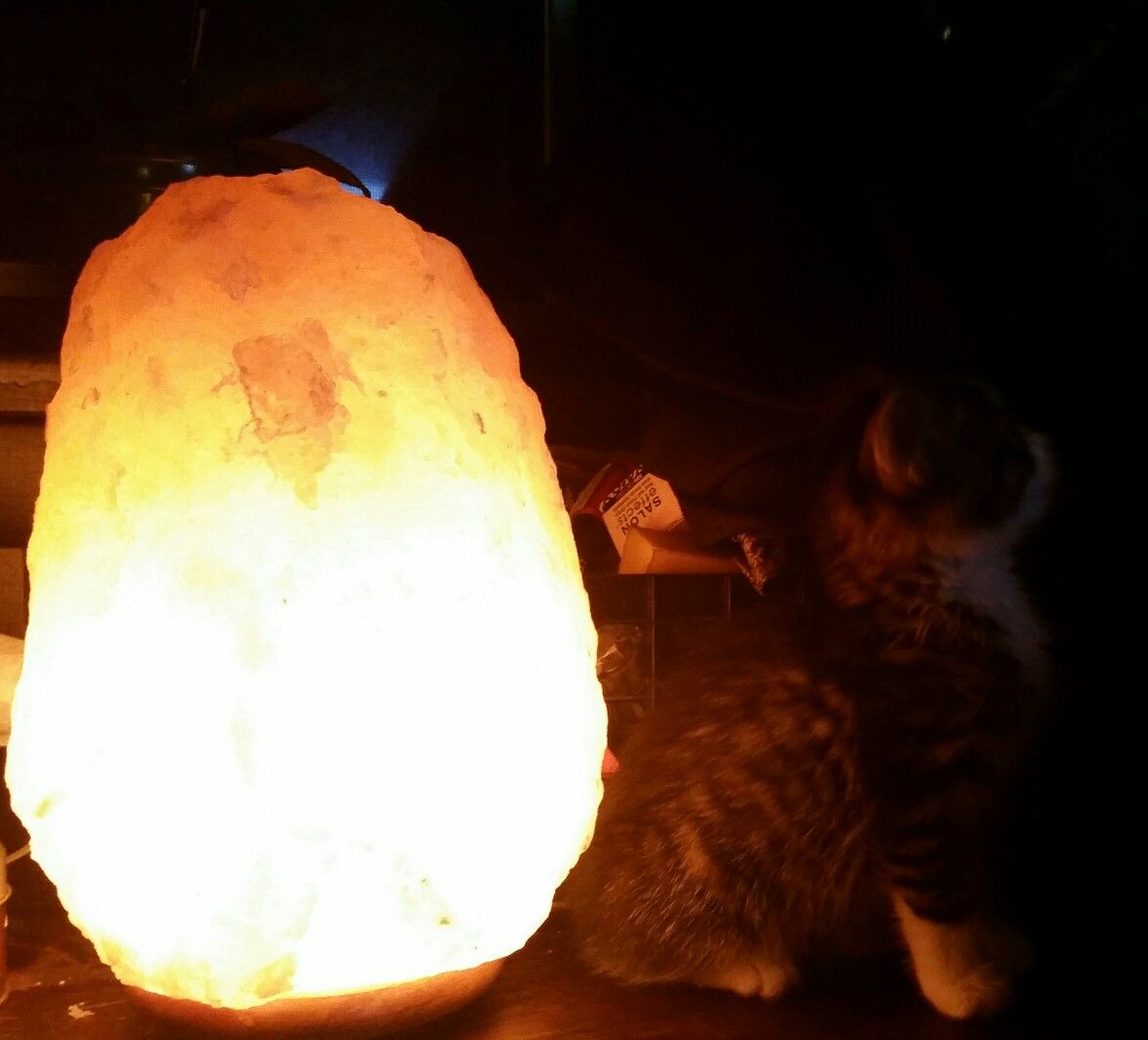 Foster Kitten Charging Up By My Salt Lamp Salt Lamp Novelty Lamp Lamp