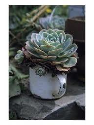 plantas em xícaras e canecas e os furos? - Pesquisa Google