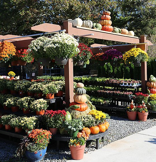 Pumpkin Totems Fall Celebrations Hyannis Country Garden Outdoor Gardens Landscaping Succulent Garden Landscape Rock Garden Landscaping