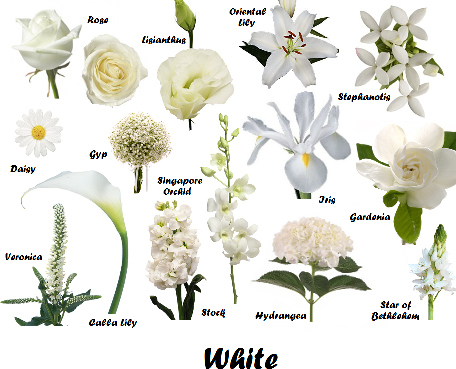 List of white flowers house beautiful house beautiful list of white flowers house beautiful mightylinksfo