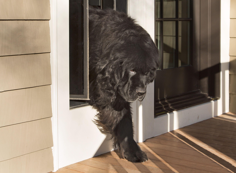 How To Install A Dog Door Dog Door Doggie Door Wall Door Kits