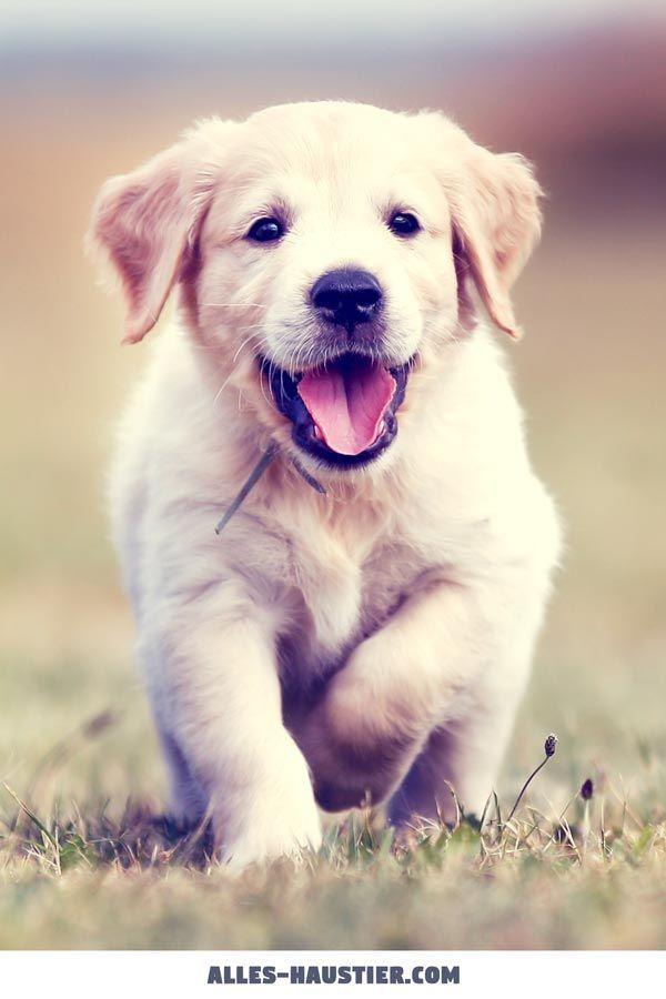21 total süßen Hunde sind leicht zu verlieben -