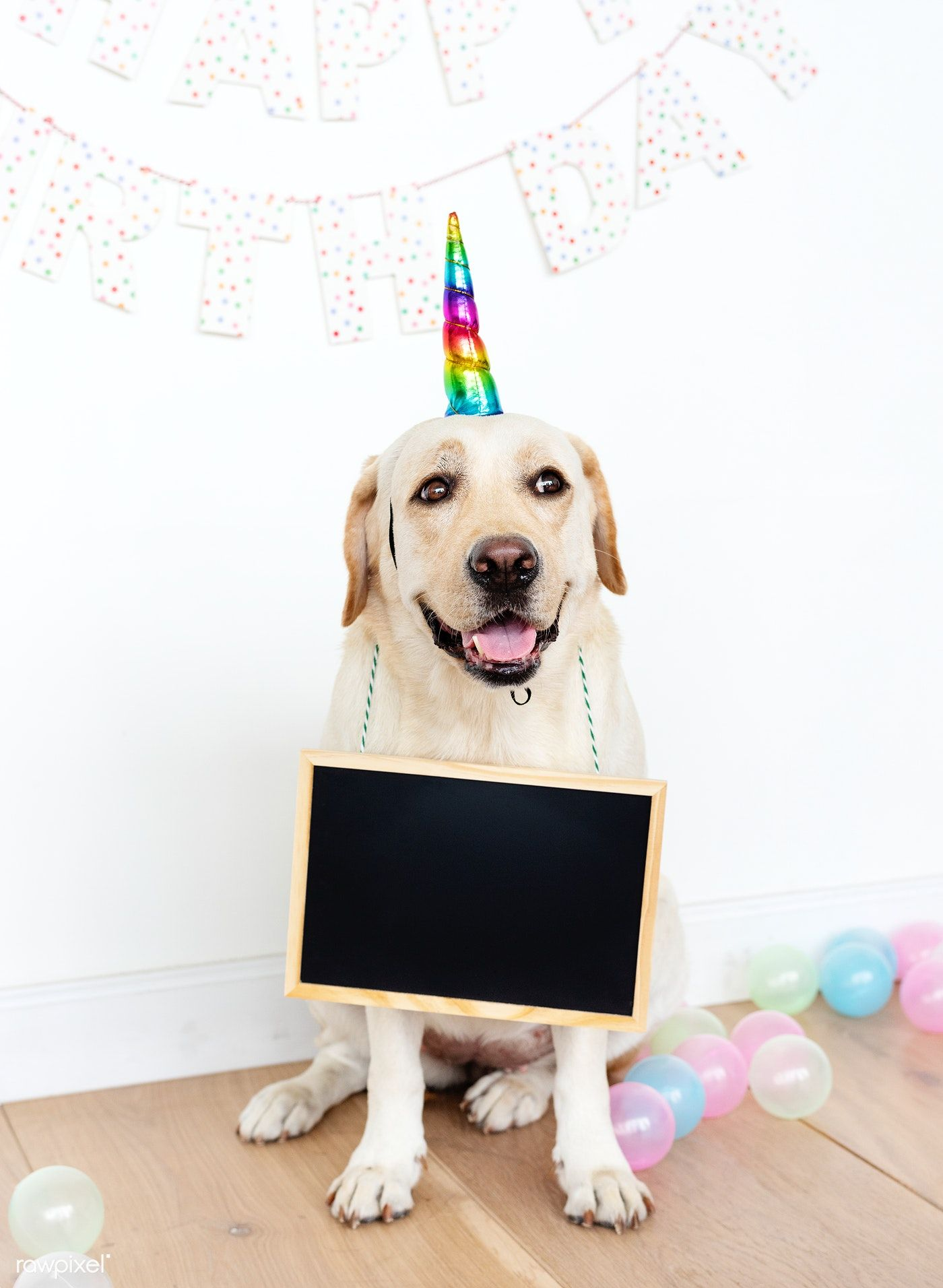 Cute Labrador Retriever With A Unicorn Hat Free Image By