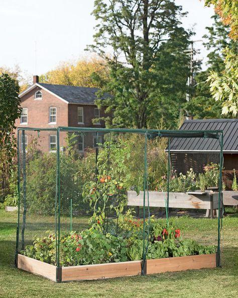 Pest-Free Garden - Raised Garden Bed with Netting | Gardeners.com ...