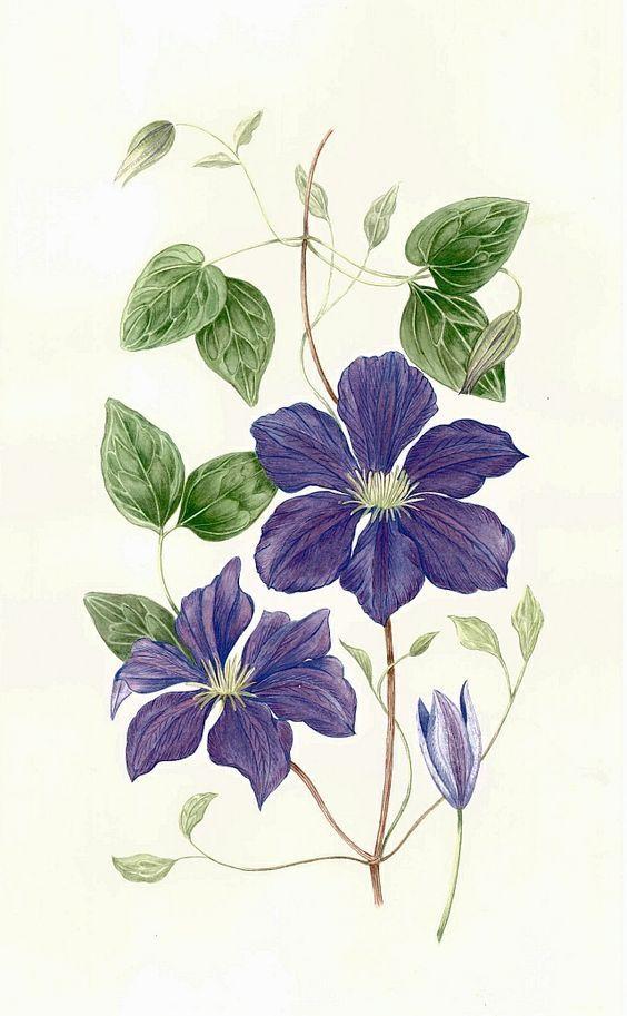 Clematis, Delphinium bouquet and Delphiniums on Pinterest