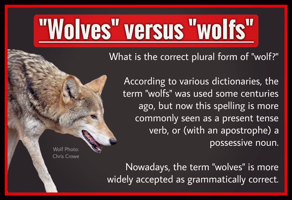 Poster by Mitch Rand Possessive nouns, Wolf photos, Plurals