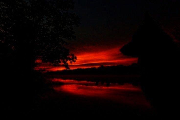 - sunsets and sunrises -Deutscher Schäferhund Sunrise von Kristin Castenschiold auf 500px   - sun