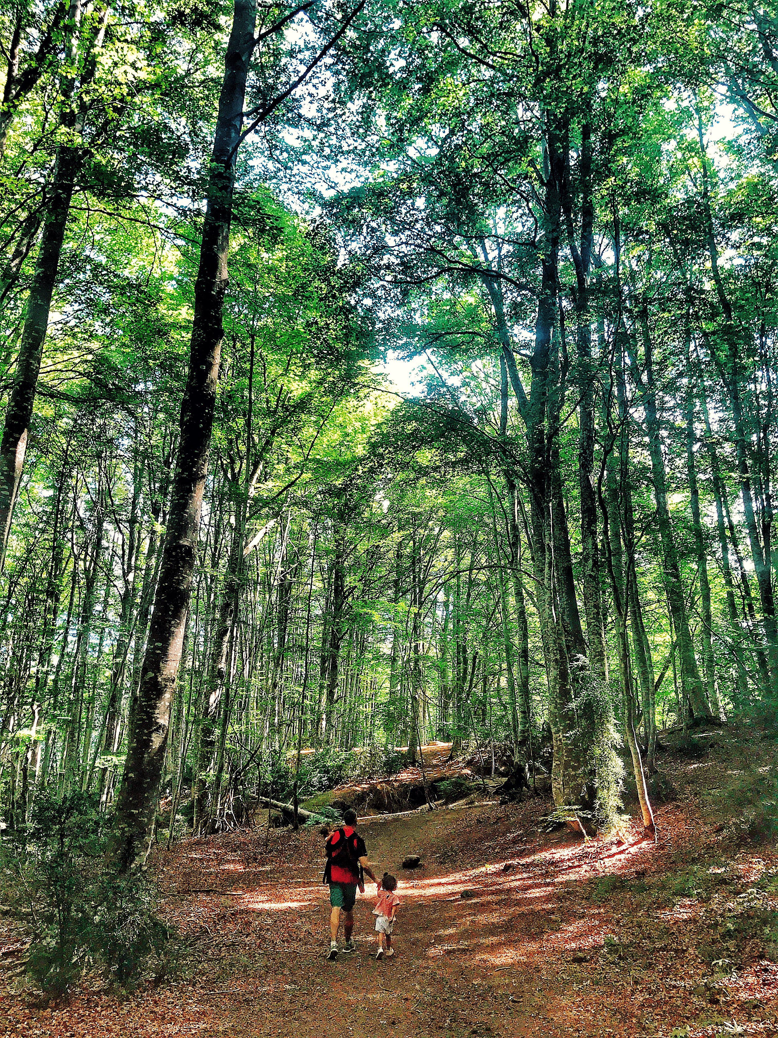 Bosque Del Betato Piedrafita De Jaca Valle De Tena Pirineos Huesca Aragón En Familia Paisajes Valle Pirineos Huesca