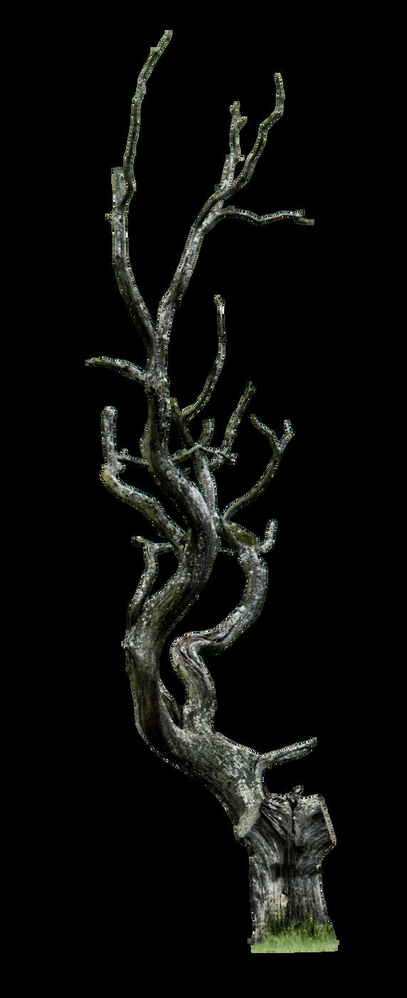 Dead Tree Png By Https Www Deviantart Com Aledjonesdigitalart On Deviantart Twisted Tree Vine Drawing Dead Tree Tattoo