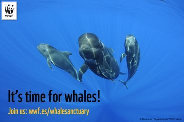 A whale sanctuary in the Canary Islands ! PLEASE SIGN ! ! - Care2 News Network