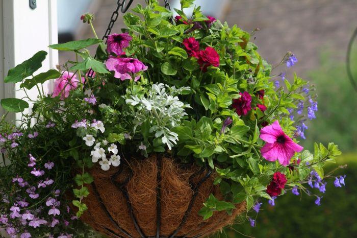 hängepflanzen balkon außenbereich dekorieren pflanzen Pflanzen - gartenpflanzen winterhart immergrun