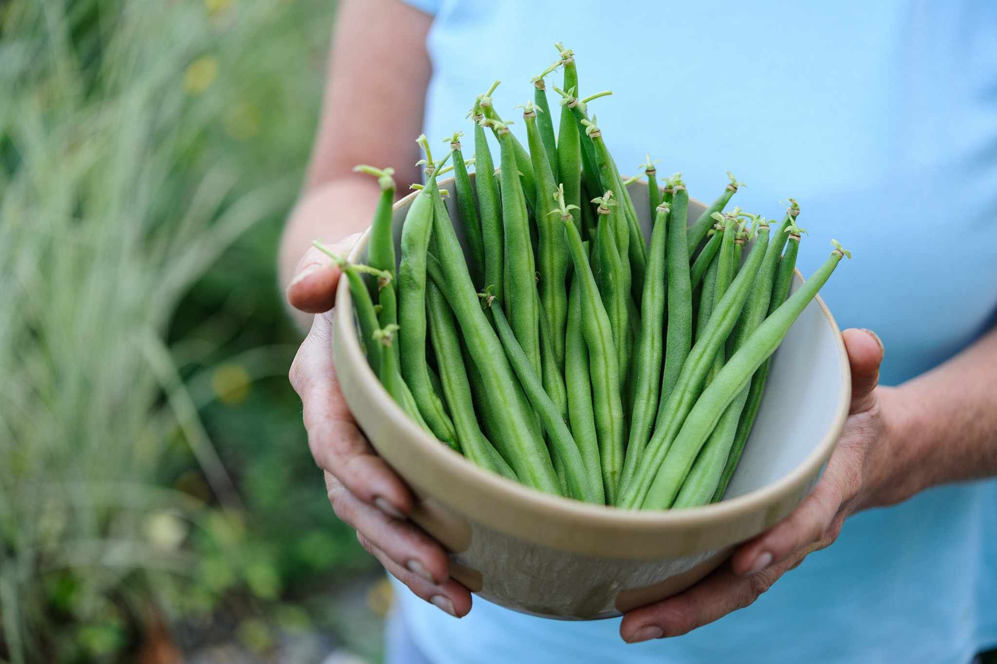 How To Grow French Beans Growing Green Beans Growing Runner Beans French Bean