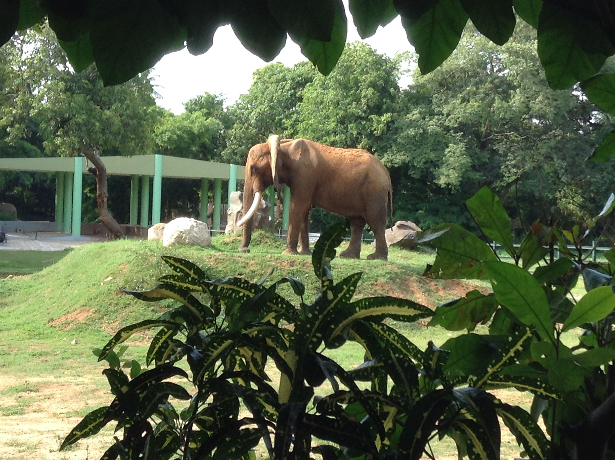 21c962107dec3bdbe6fd591b8ee087f2 - Mysore Zoo Sri Chamarajendra Zoological Gardens