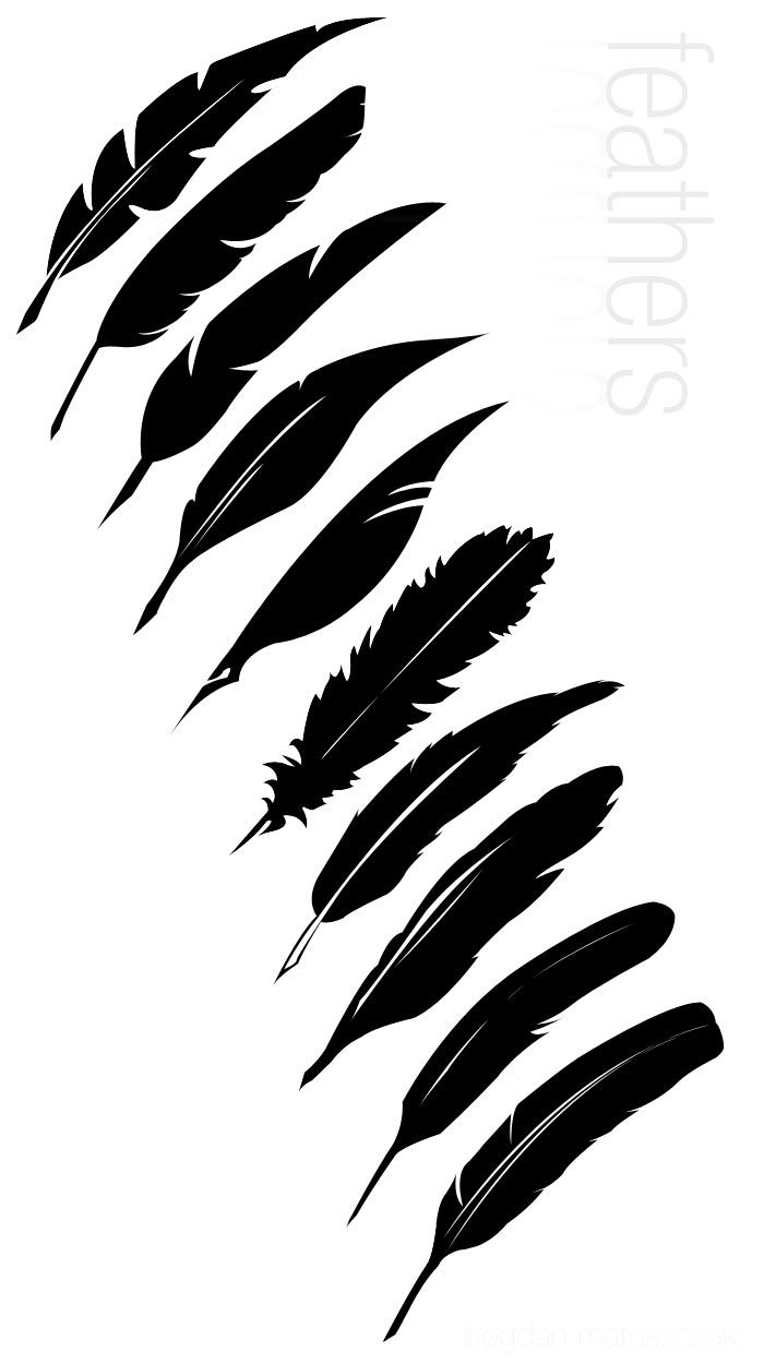 Vector Feathers Hl By Halfliquid On Deviantart Feather Graphic Silhouette Stencil Feather