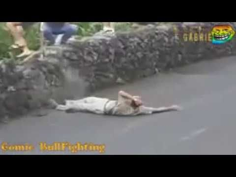 amazing  Funny bullfighting festival in Portugal Best funny video viral ...