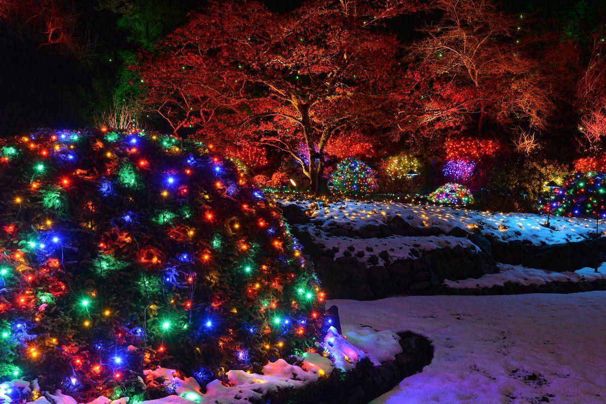 21cacd579ee0c769d22015d5f9ef1a89 - The Butchart Gardens Christmas Lights Tour