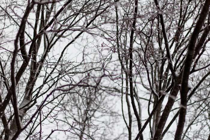 Nakne trær venter på vår...