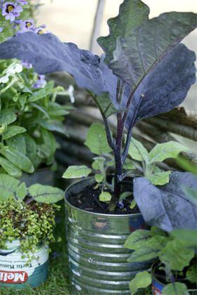 Heb je nog een paar oude blikken staan? //www.tuinieren.nl ... Designing A Vegetable Garden Pots Html on