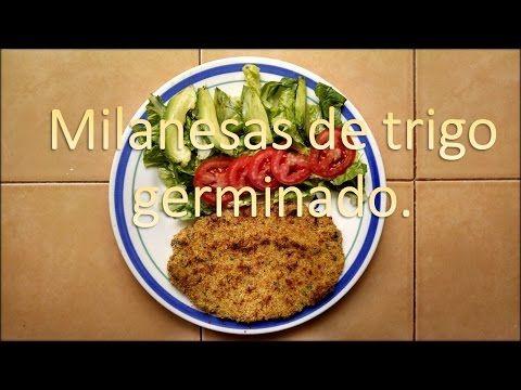 Milanesas de trigo germinado - YouTube