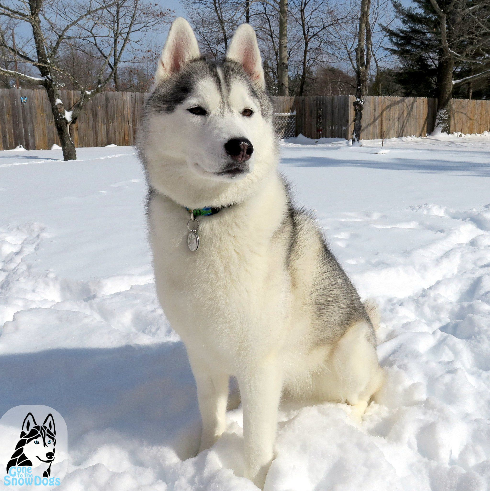 2 Snow Dogs Vlogs Snowdogsvlogs On Twitter Snow Dogs