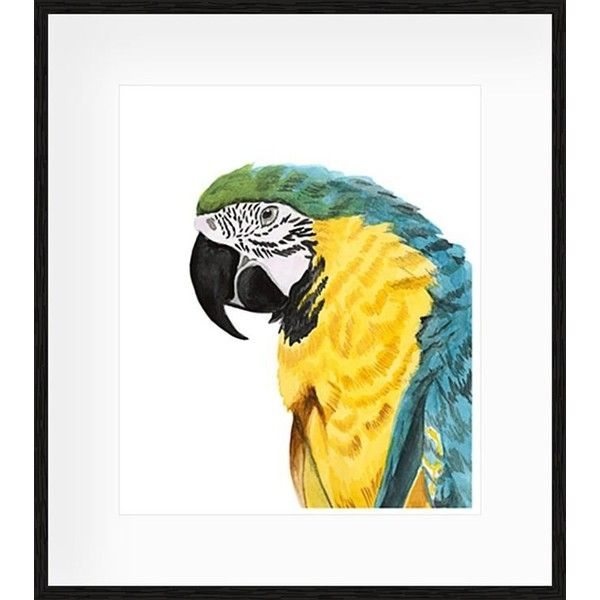 Watercolour Parrot Framed Print (249 AUD) ❤ liked on Polyvore ...