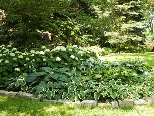 Boxwood Hydrangea And Hostas Landscaping Hydrangeas Hostas Garden Pinterest Yard Landscaping Front Yard Landscaping Front Yard Landscaping Design