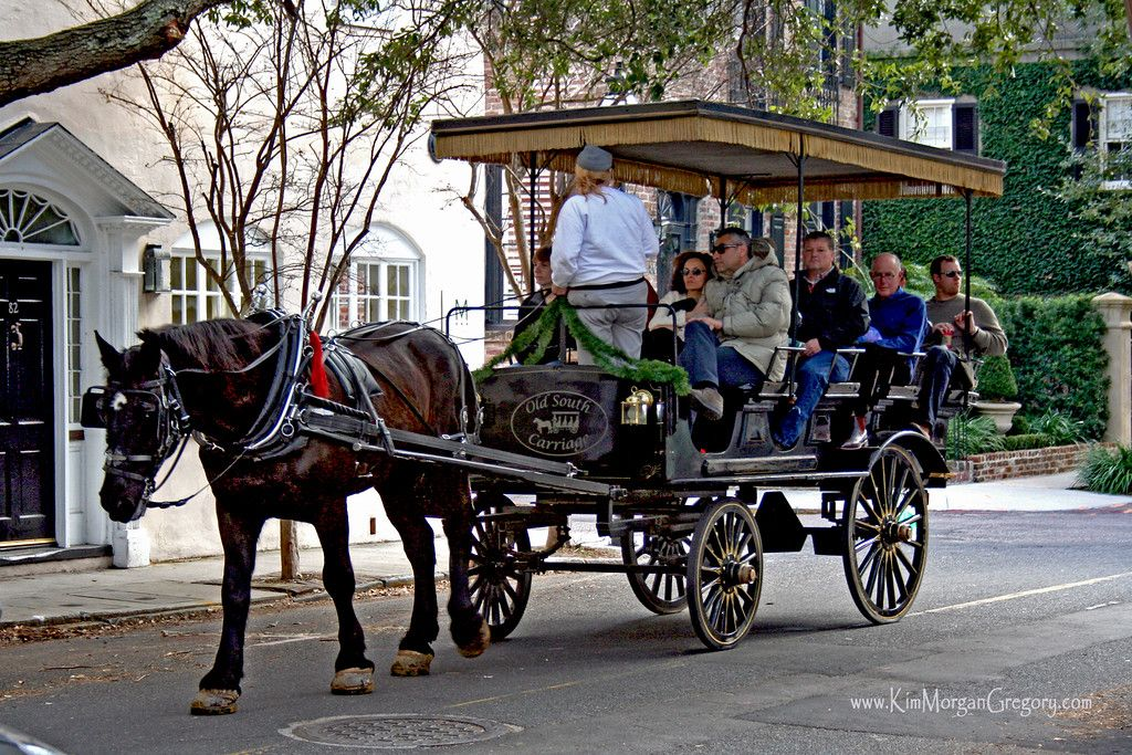 historic charleston sc carriage rides favorite places rh pinterest com