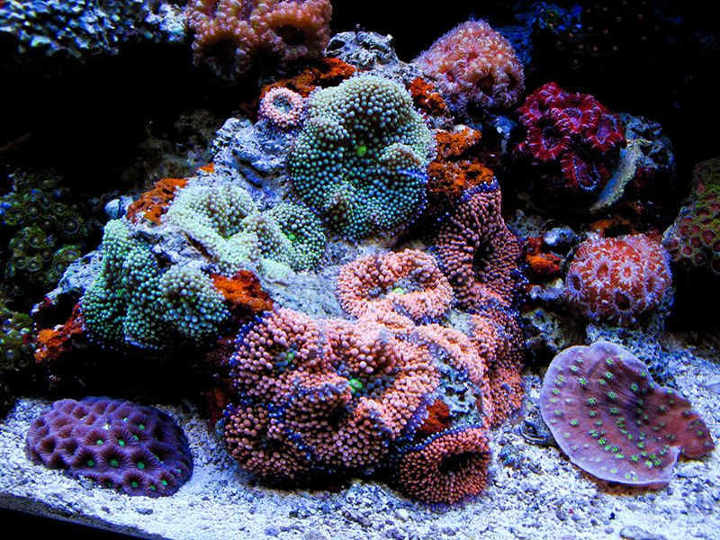 matth6761 - 2011 Featured Nano Reefs - Featured Aquariums - Monthly Featured Nano Reef Aquarium Profiles - Nano-Reef.com Forums