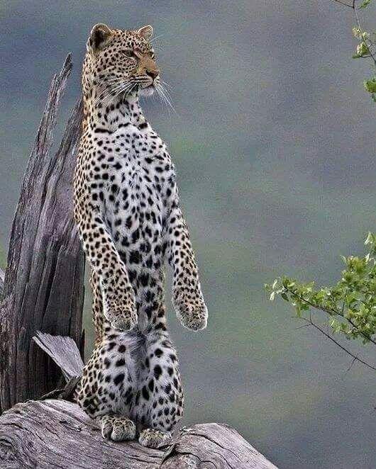 Angel Kiyoss Observando Tiere Wilde Tiere Tiere Schon
