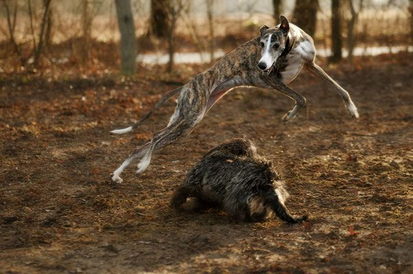Hundefotos Hochzeitsfotografie, Tierfotografie