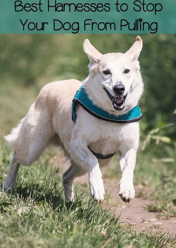 Best No Pull Dog Harnesses For Walking Your Dog Dog Harness