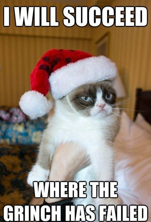 15 Funny Christmas Cats Photos | Funny christmas, Cat and Grumpy cat